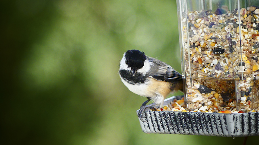 Fall_Gardening_ bird_feeder